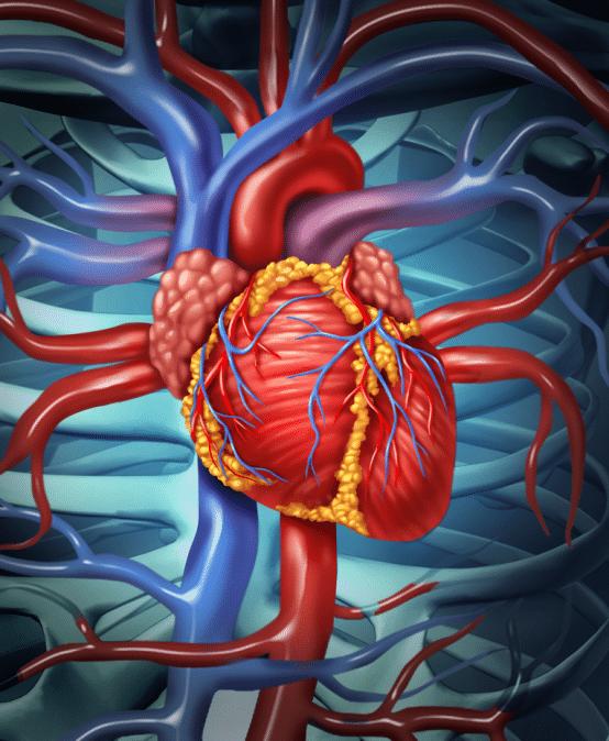 Heart Failure Education Hub